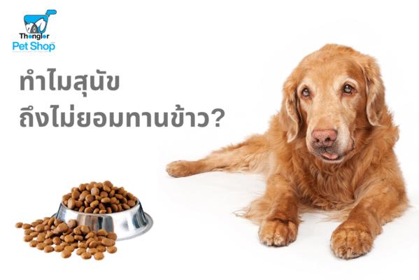 ทำไมสุนัขถึงไม่ยอมทานข้าว 3 |