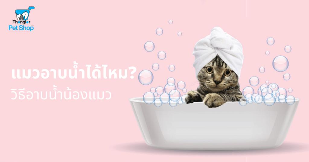วิธีอาบน้ำน้องแมว แมวอาบน้ำได้ไหม 2 | แมวอาบน้ำได้ไหม