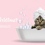 แมวอาบน้ำได้ไหม