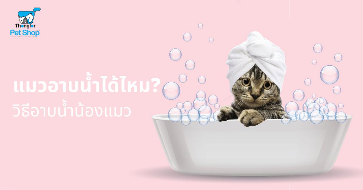 หน้าหลัก | แมวอาบน้ำได้ไหม
