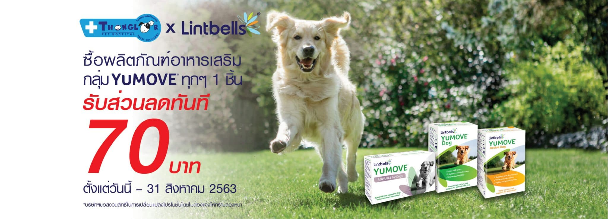 Banner YuMOVE dog ThonglorAug |