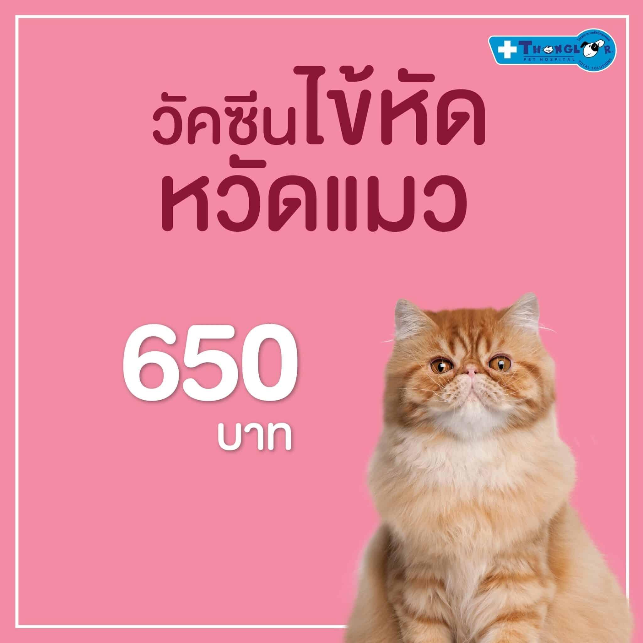 วัคซีนราคาใหม่เอาใจทาสแมว |