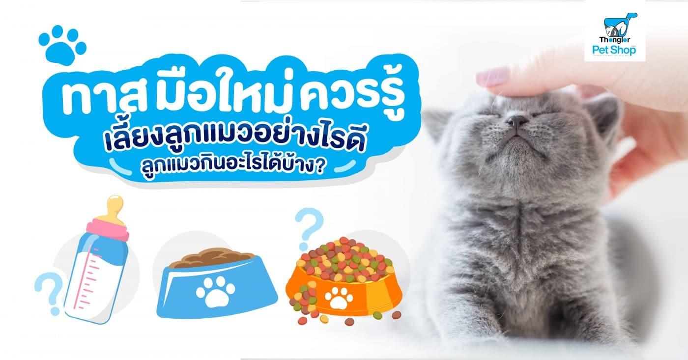 ทาสแมว01 |