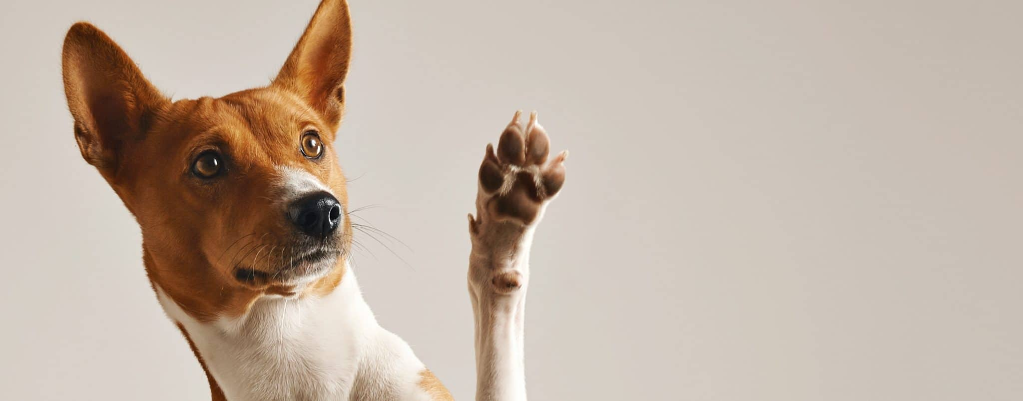 Cute dog giving his paw |