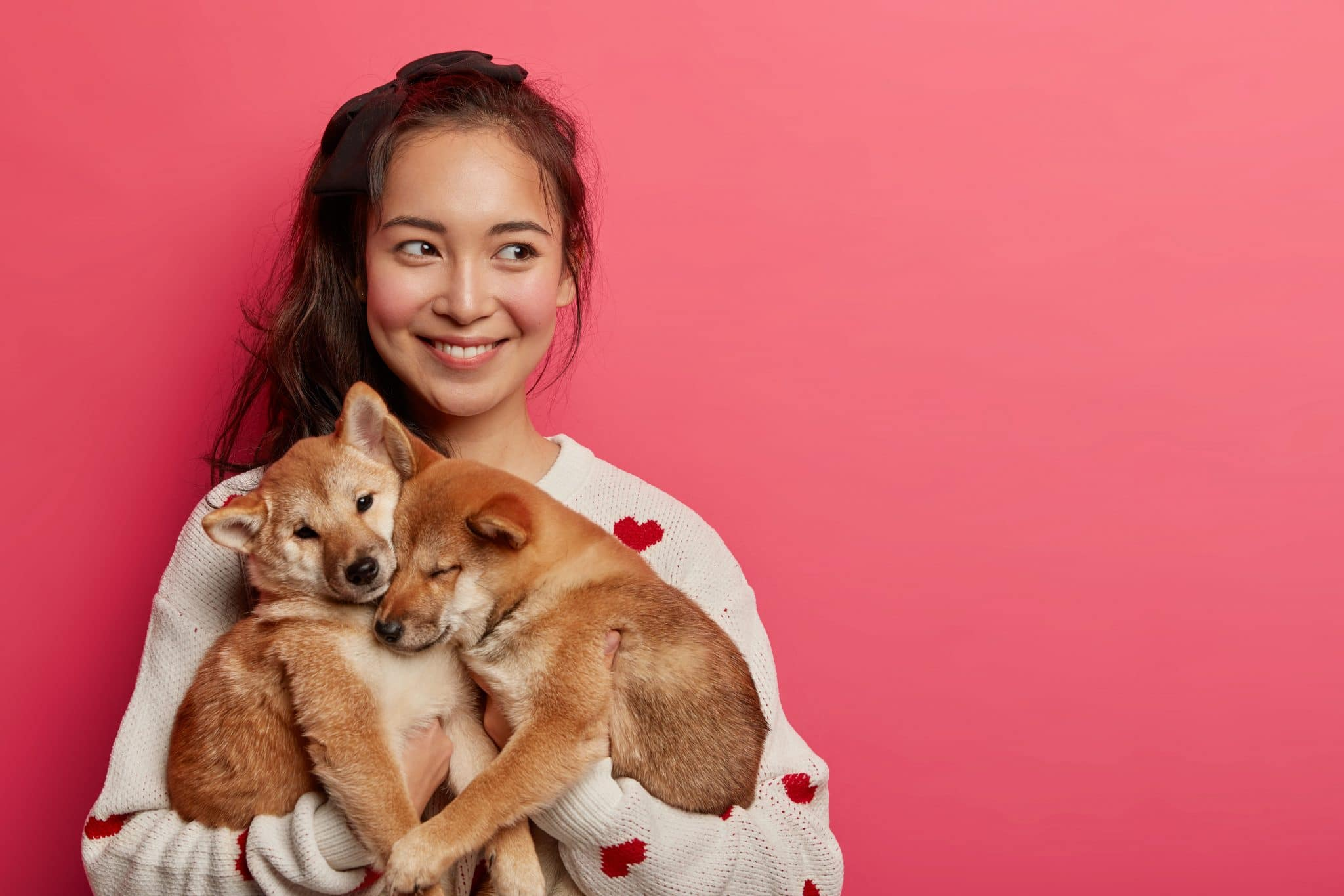 Beautiful brunette woman plays with two shiba inu dogs looks away thinks how to feed pets and teach commands expresses caress isolated on pink background Human and animal connection trust |