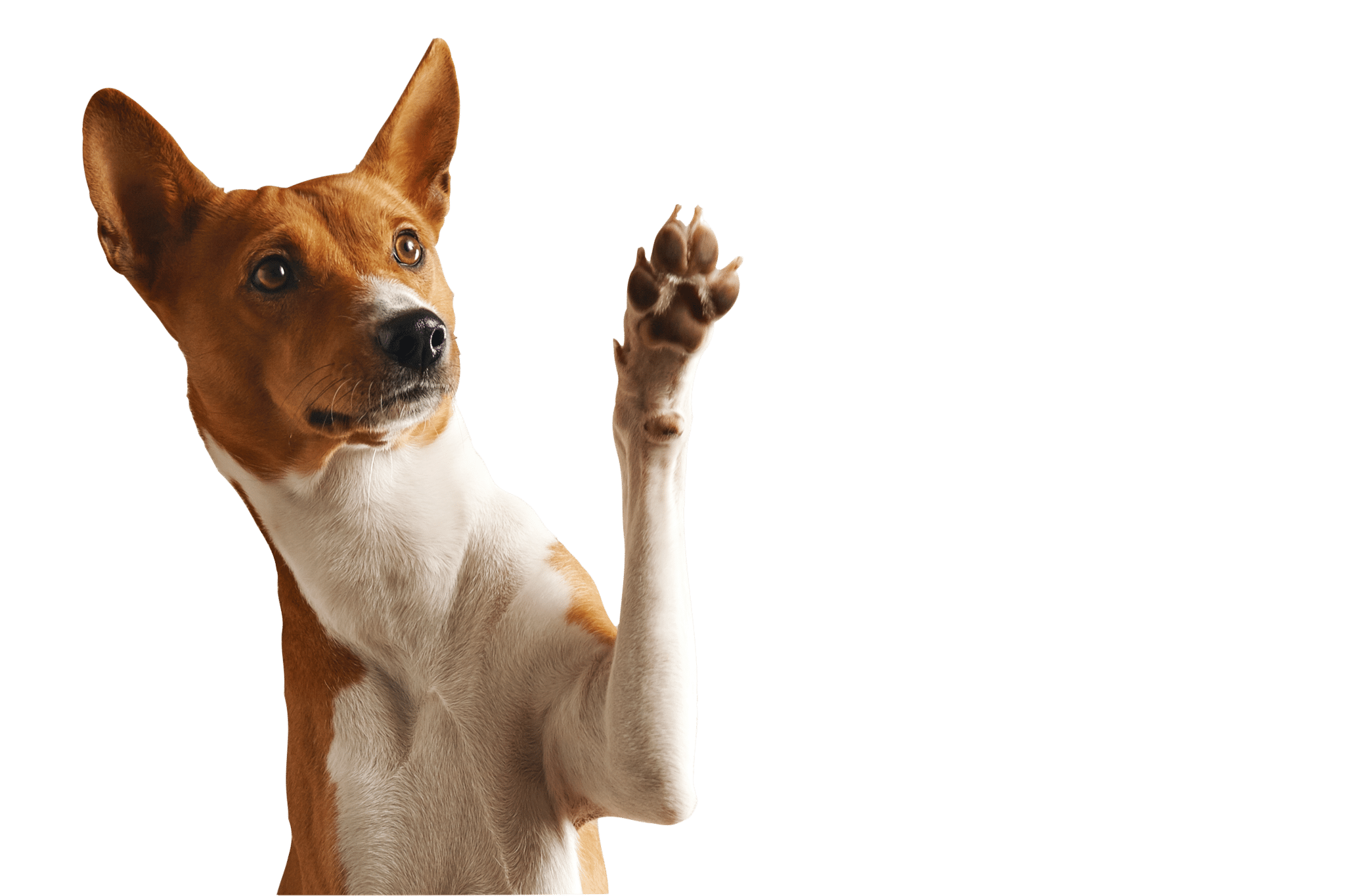 try this one basenji |