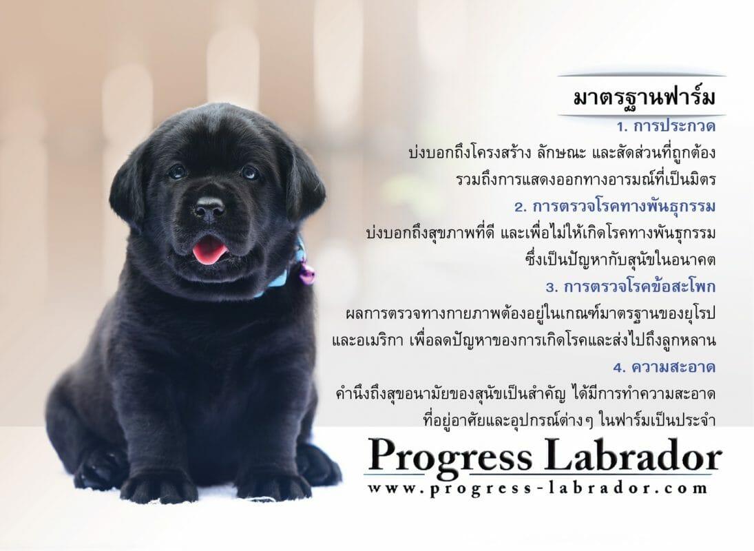 Progress LabradorTH |