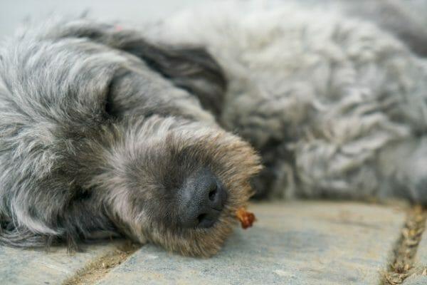 sleepingdogabout11221171  